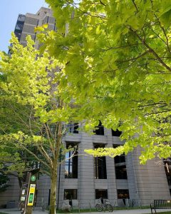 Tree in front of Robarts Library in summer