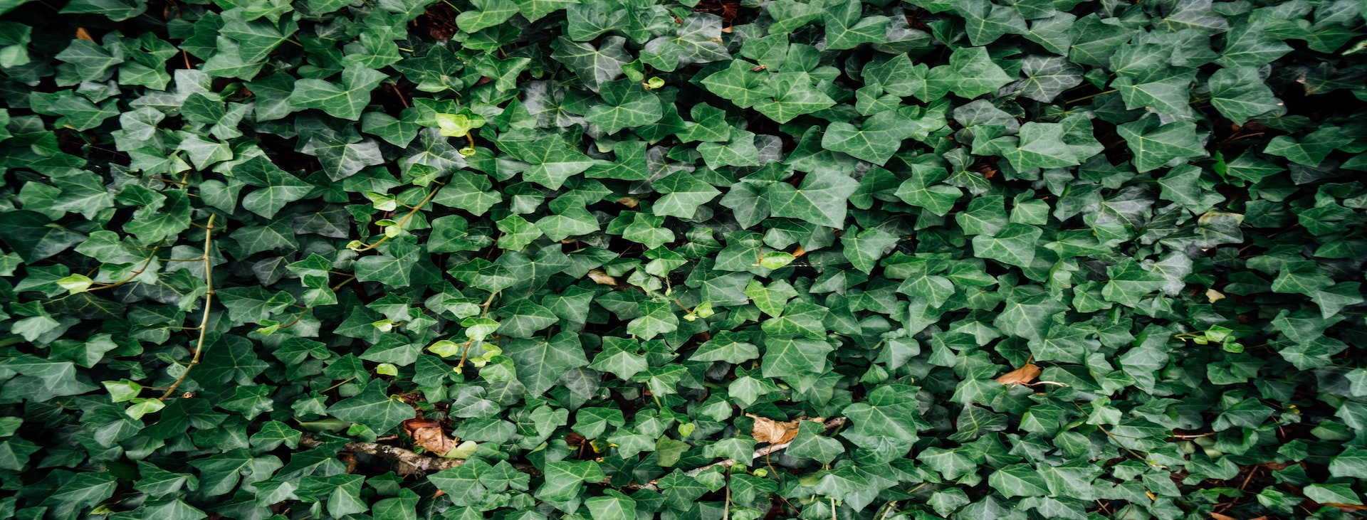 walls of leaves